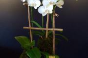 Фото 35 Горшочек для орхидеи: определяемся с размерами и все секреты правильного выбора