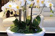 Фото 37 Горшочек для орхидеи: определяемся с размерами и все секреты правильного выбора