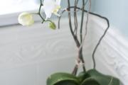 Фото 5 Горшочек для орхидеи: определяемся с размерами и все секреты правильного выбора