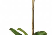 Фото 8 Горшочек для орхидеи: определяемся с размерами и все секреты правильного выбора