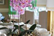 Фото 10 Горшочек для орхидеи: определяемся с размерами и все секреты правильного выбора