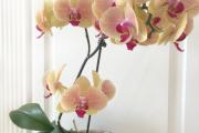 Фото 12 Горшочек для орхидеи: определяемся с размерами и все секреты правильного выбора