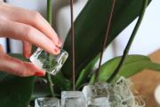 Фото 13 Горшочек для орхидеи: определяемся с размерами и все секреты правильного выбора