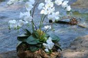 Фото 14 Горшочек для орхидеи: определяемся с размерами и все секреты правильного выбора