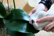 Фото 16 Горшочек для орхидеи: определяемся с размерами и все секреты правильного выбора