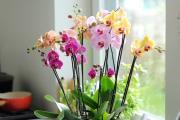 Фото 17 Горшочек для орхидеи: определяемся с размерами и все секреты правильного выбора