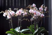Фото 20 Горшочек для орхидеи: определяемся с размерами и все секреты правильного выбора