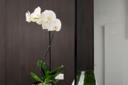 Фото 23 Горшочек для орхидеи: определяемся с размерами и все секреты правильного выбора