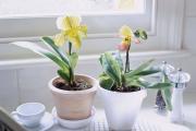 Фото 4 Горшочек для орхидеи: определяемся с размерами и все секреты правильного выбора