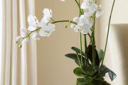 Фото 32 Горшочек для орхидеи: определяемся с размерами и все секреты правильного выбора