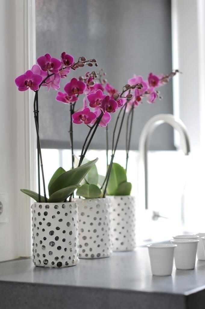 Горшочек для орхидеи: Секреты правильного выбора