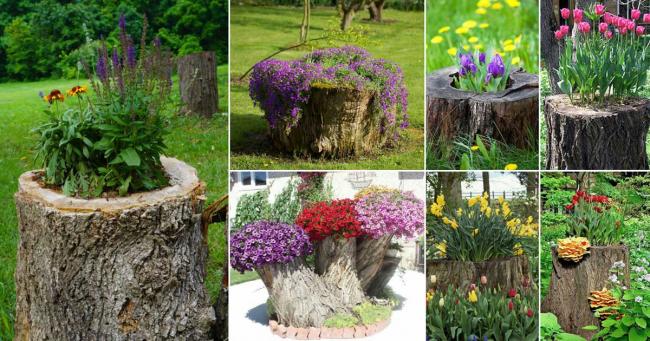 Столетние пни выкорчевывать даже жаль, поэтому им можно дать вторую жизнь в качестве эксклюзивного садового вазона. Также можно устраивать вазоны для горшков в срезах бревен и выкорчеванных и очищенных пнях