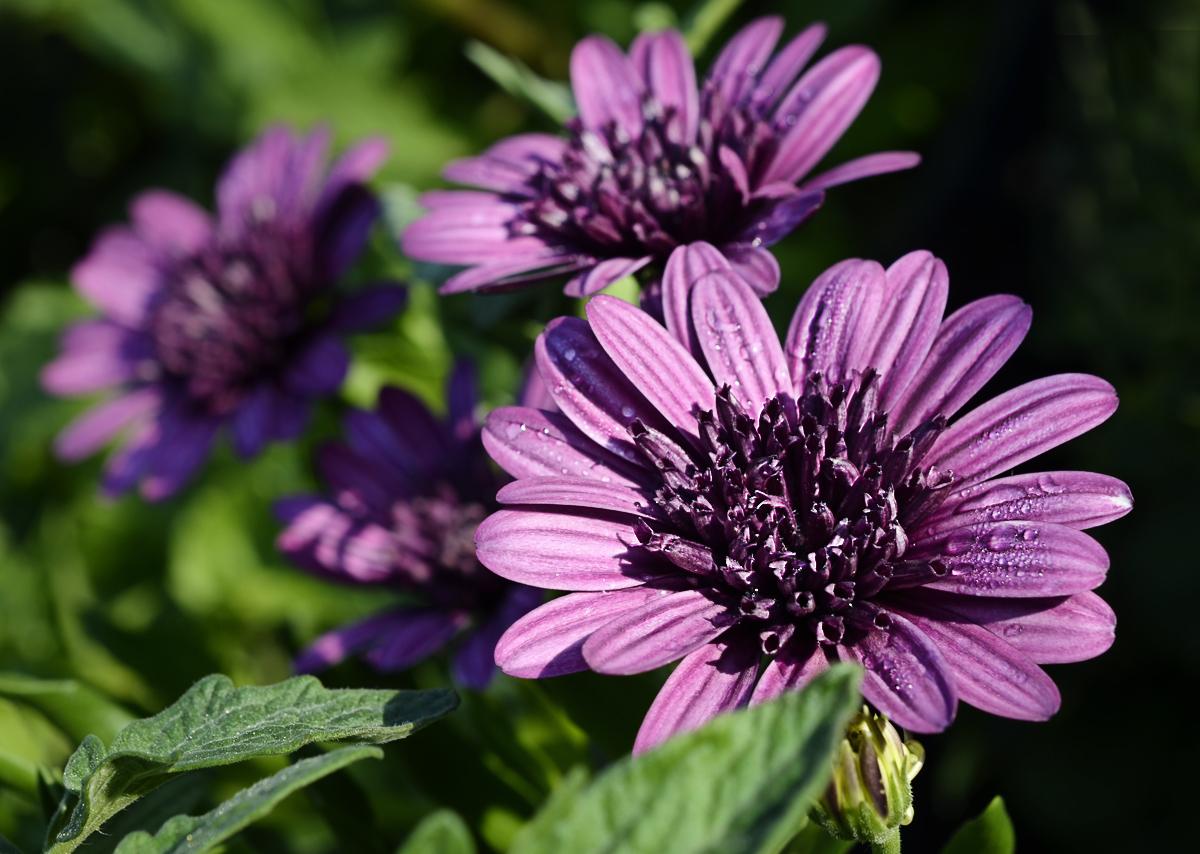 Переизбыток влаги негативно сказывается на растении