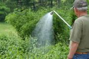 Фото 14 Сорта ремонтантной малины: особенности посадки, правильного ухода и советы садоводов