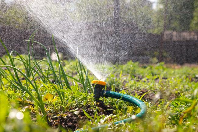 У дождевой технологии полива очень хорошее орошение