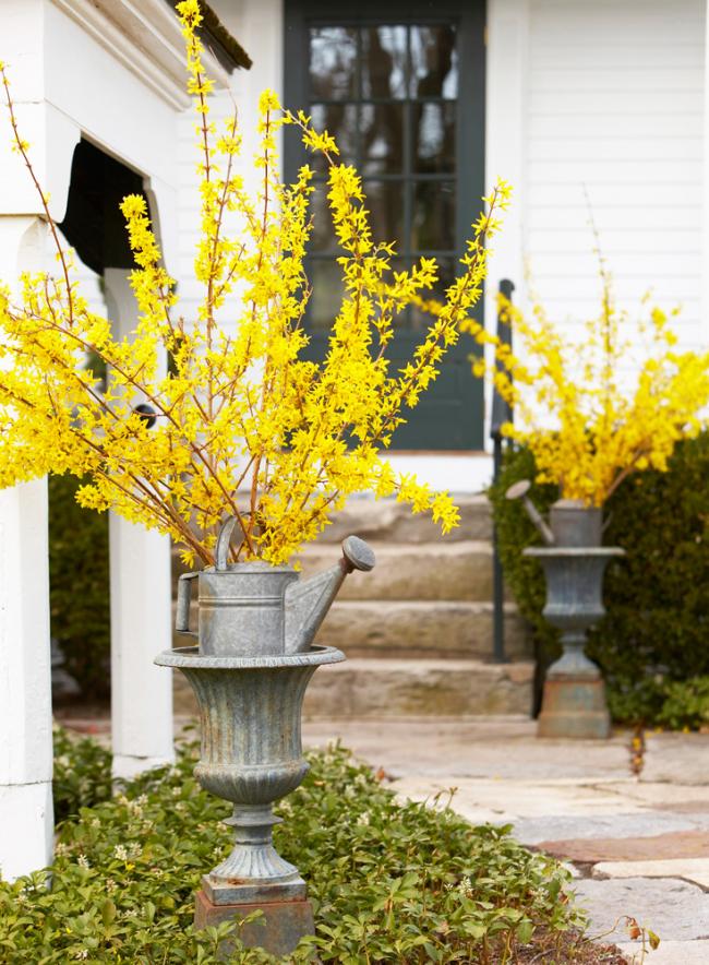 Красивые яркие цветы форзиции украсят вход в дом