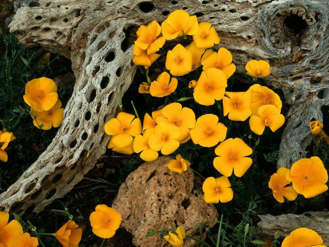 Светолюбивое растение, которое украсит любую клумбу