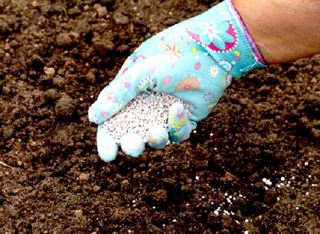 Перед посадкой необходимо удобрить почву
