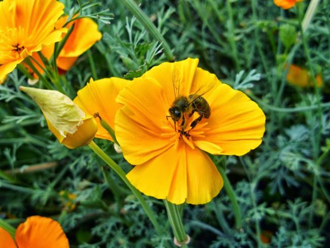 Солнечный цветок создает настроение всей клумбе