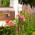 Иссоп или синий зверобой: обзор целебных свойств растения и его использование в кулинарии фото