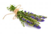 Фото 2 Иссоп или синий зверобой: обзор целебных свойств растения и его использование в кулинарии