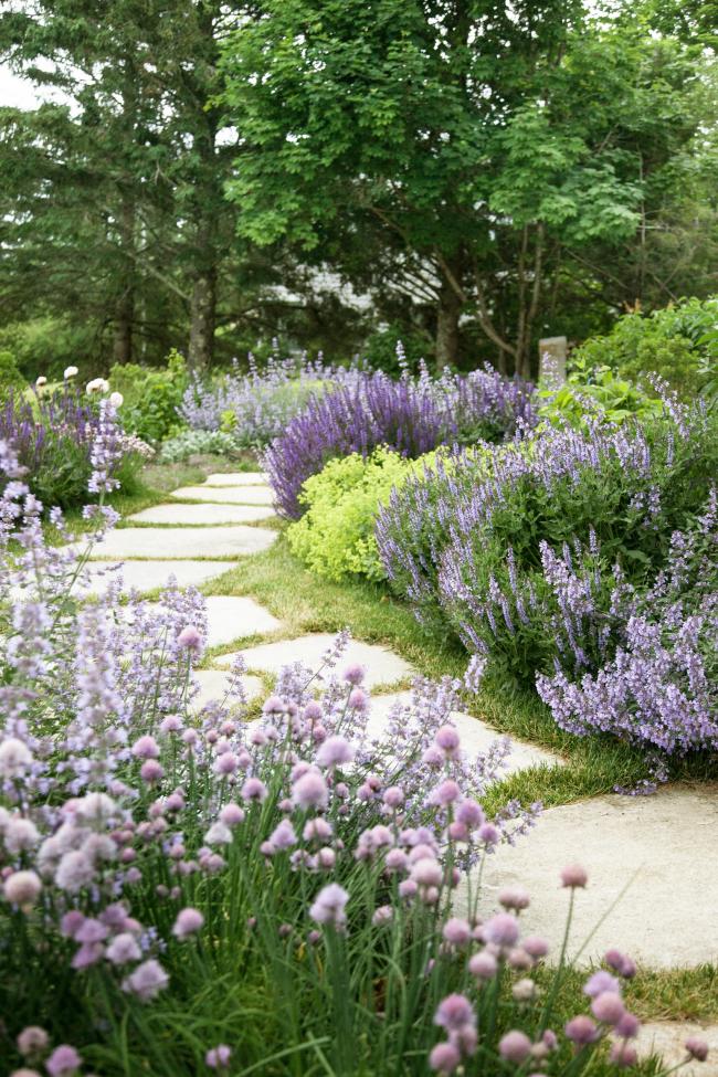 Кусты иссопа красиво смотрятся в сочетании с другими декоративными растениями