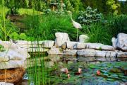 Фото 24 Белая кувшинка: все, что нужно знать о сборе и полезных свойствах водяной лилии