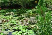 Фото 25 Белая кувшинка: все, что нужно знать о сборе и полезных свойствах водяной лилии