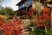 Фото 17 Бересклет: фотообзор различных сортов и советы по обустройству ландшафтного дизайна