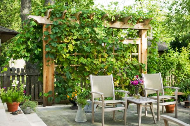 Деревянная пергола, обвитая лозами винограда