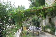 Фото 37 Неукрывной виноград для Подмосковья: как выбрать материал для посадки морозостойких сортов?