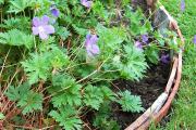 Фото 18 Ограждения для клумб и грядок: 70+ роскошных идей, которые преобразят ваш сад