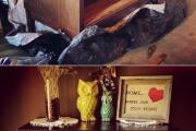 Фото 26 Старая мебель: 75+ потрясающих идей обновления и реставрации мебели без лишних затрат