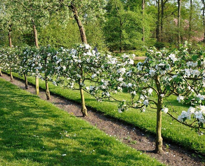 Быстрорастущая живая изгородь: ландшафт своими руками 2017
