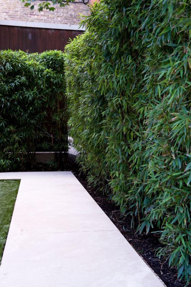 Из взрослой ивы можно сделать пышный зеленый куст в качестве изгороди