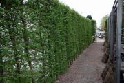 Фото 12 Быстрорастущая живая изгородь: комбинации и ландшафтные композиции своими руками