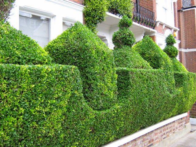 Фигурное подрезание зеленой изгороди