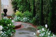 Фото 20 Быстрорастущая живая изгородь (65+ фото с названиями): лучшие многолетние и вечнозеленые растения и кустарники