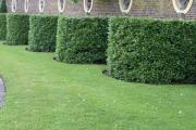 Фото 21 Быстрорастущая живая изгородь: комбинации и ландшафтные композиции своими руками