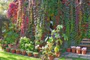 Фото 9 Быстрорастущая живая изгородь: комбинации и ландшафтные композиции своими руками