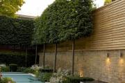 Фото 26 Быстрорастущая живая изгородь (65+ фото с названиями): лучшие многолетние и вечнозеленые растения и кустарники