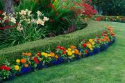 Фото 13 Быстрорастущая живая изгородь (65+ фото с названиями): лучшие многолетние и вечнозеленые растения и кустарники