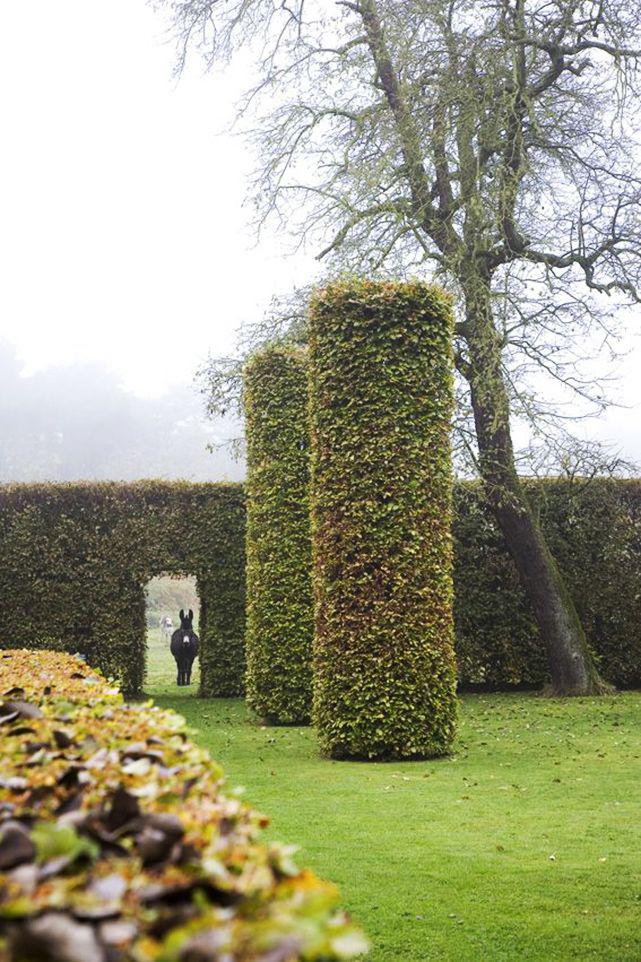 Трехметровый живой забор из лиственных деревьев