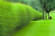 Фото 34 Быстрорастущая живая изгородь (65+ фото с названиями): лучшие многолетние и вечнозеленые растения и кустарники