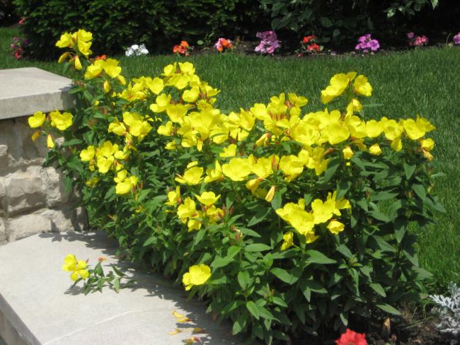 Посадка многолетних цветов в саду