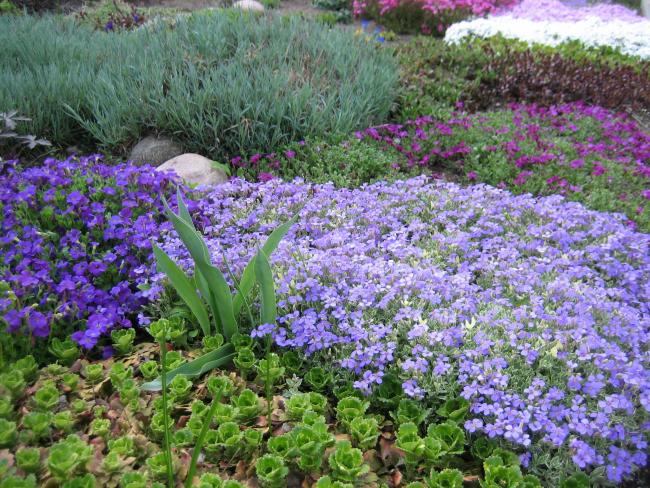 Роскошное сочетание фиолетового и пурпурного
