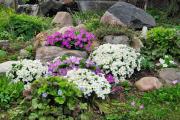 Фото 15 Как вырастить обриету? Ландшафтные дизайнеры и садоводы раскрывают все секреты