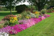 Фото 23 Как вырастить обриету? Ландшафтные дизайнеры и садоводы раскрывают все секреты