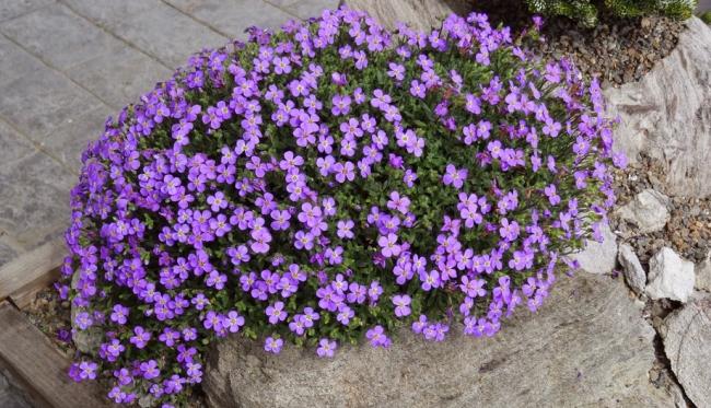 Лучший вариант для декорации камей в вашем саду
