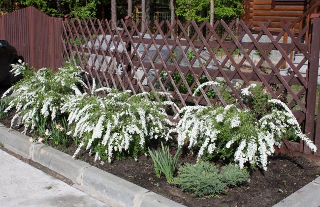 Небольшие кусты украсят газон за забором